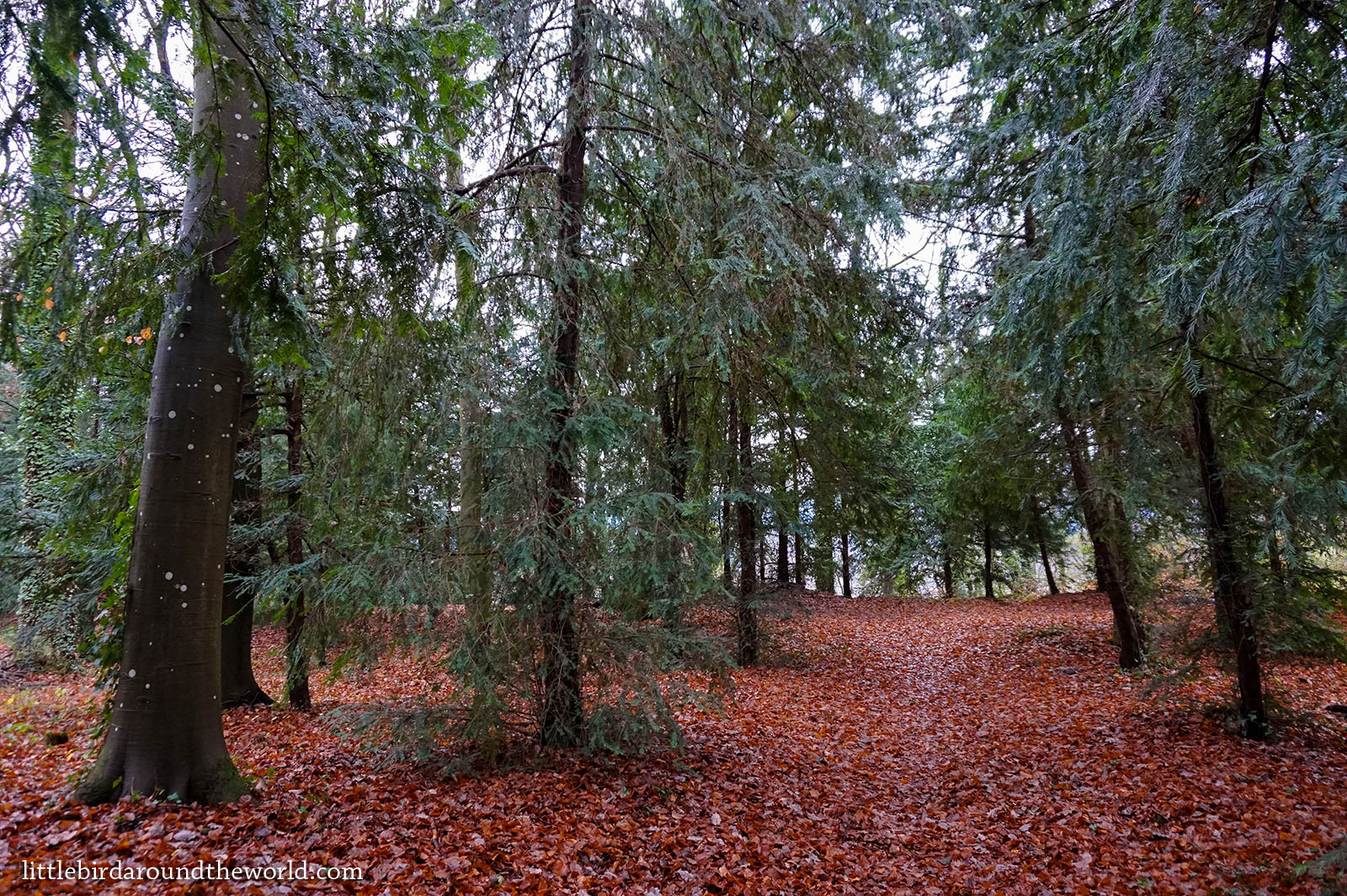 germany black forest freiburg