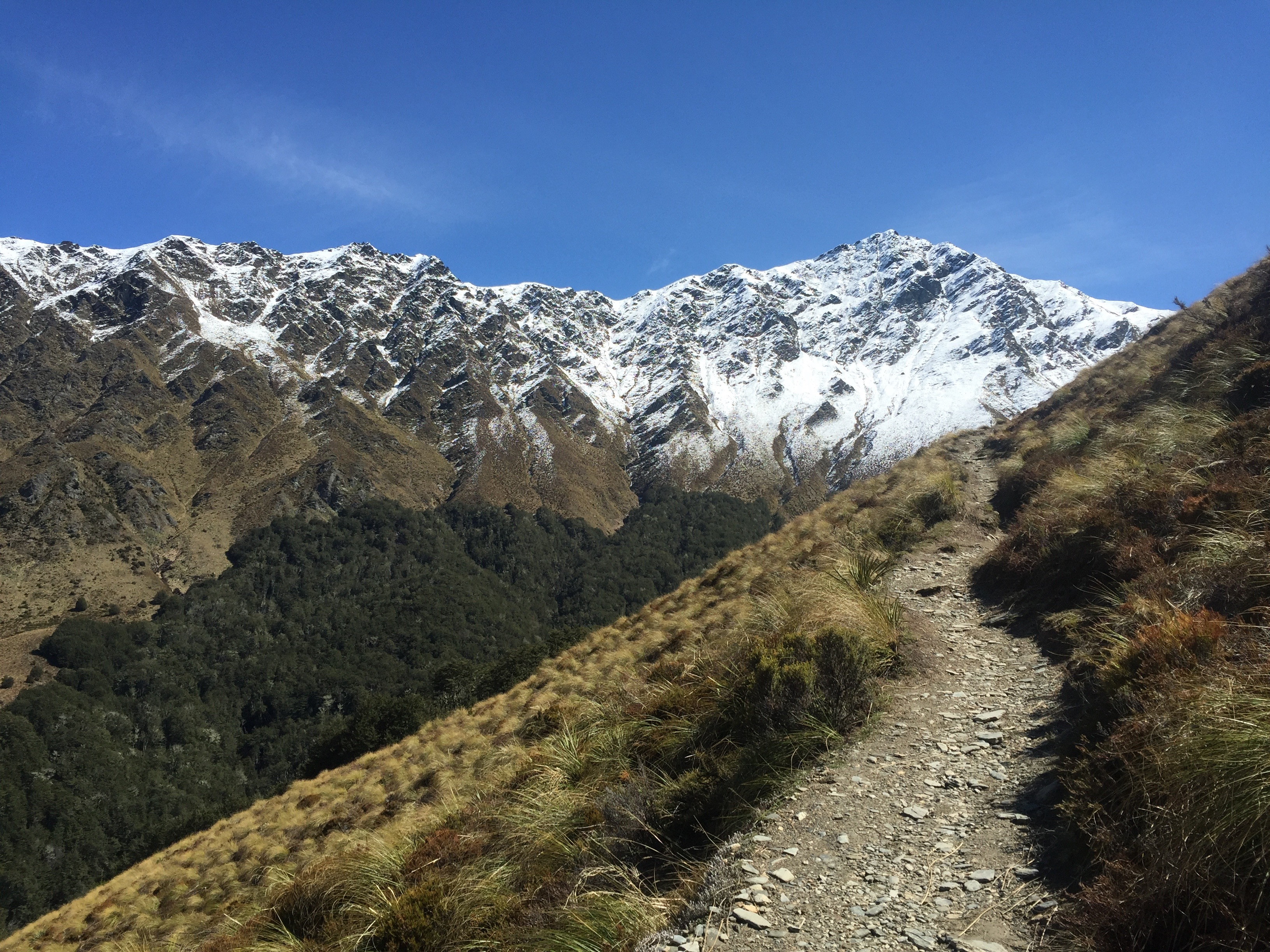 How To Get Around In New Zealand Without A Car